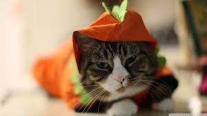 cute halloween hd wallpaper halloween funny cat hd desktop wallpaper high definition