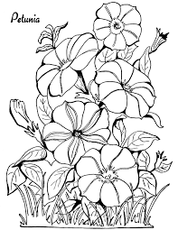 coloring page petunias the graphics fairy