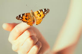 butterfly symbolism and meaning in culture shop lc