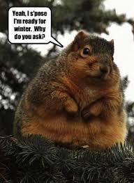 Ermahgerd Animal Memes - ready for winter squirrels pinterest squirrel funny animal