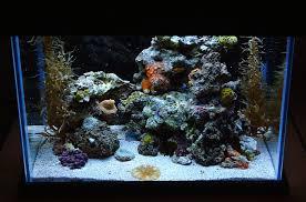 nano aquascape what s the best nano aquascape you ve ever seen general