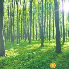 forests november 2017 browse articles the changing benefits of forest bathing dr douillard s lifespa