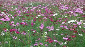 immagini di giardini fioriti giardini