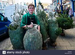 a boy selling trees in the