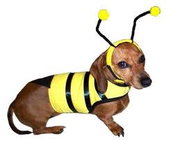 Halloween Costumes Large Dogs Bumble Bee Big Dog Halloween Costume Bumble Bee Costume