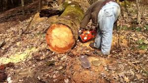 who says a 455 rancher can u0027t cut big timber youtube