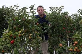 Garden Tree Types - 250 varieties of apple on one tree thanks to a bit of hard