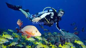 Louisiana snorkeling images Scuba diving videos and photos seal sports of louisiana jpg