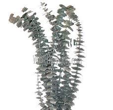 silver flowers eucalyptus metallic silver flower filler at bulk for sale