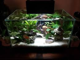 31 best fluval edge aquarium images on aquarium fish