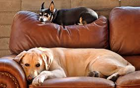 Bed Bugs On Cats Can Cats Or Dogs Get Bed Bugs Pethelpful