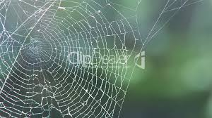 halloween nature background spider spider web in forest royalty free video and stock footage