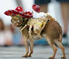Puppy Halloween Costumes 370 Million Spent Pet Halloween Costumes