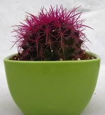 cacti u0026 succulents plants cacti u0026 succulents garden online store