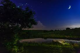 Moonlight Landscape Lighting by Bigeye Photography How Did I Do It Lightning Bugs