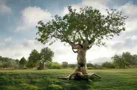human tree picture ebaum s world