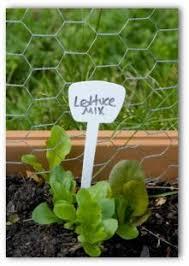 choose a home vegetable garden plan