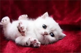 aliexpress buy diy frame naughty white cat baby kitty animal