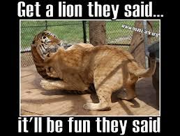 Funny Tiger Memes - big cats do not make good pets www noahs ark org noahsark lol