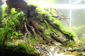 How To Aquascape A Planted Tank Planted Tank Down To Riverside By Ariealan Aquarium Design