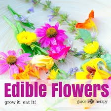 edible flowers the ten best edible flowers to grow in your garden