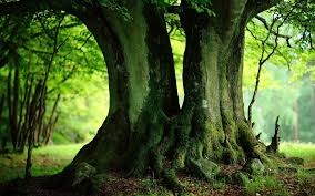 green tree wallpaper free hd wallpapers cool images free