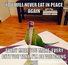 Parrot Meme - 15 lol parrot memes for you to enjoy i can has cheezburger