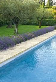 Landscaping Around Pool Best 25 Landscaping Around Pool Ideas On Pinterest Backyard