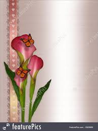 illustration of calla lilies and butterflies