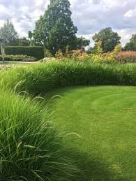 ornamental grasses for privacy images for the garden