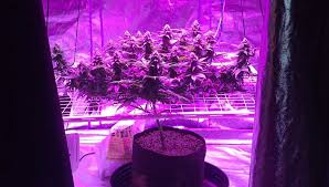 how to build a led grow light how to take true color pictures under led grow lights grow weed easy