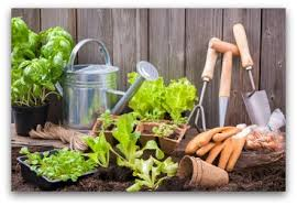 best time plant vegetable garden when to plant a vegetable garden