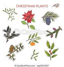 christmas plants collection of winter plants christmas design vector vectors