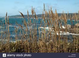 planting native grasses non native grasses on the mendocino coast of northern california