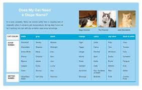 amazon com how to make your cat an internet celebrity a guide to