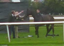 photo shows horse put down with shot to the head after shattering