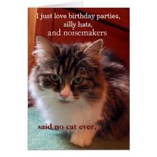 cat lovers birthday note cards cat lovers birthday notecards