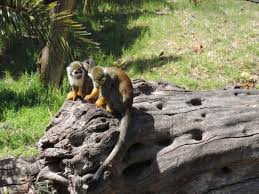 Tisch Family Zoological Gardens - biblical zoo picture of tisch family zoological gardens