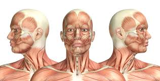 Parts Of The Face Anatomy Chiari Malformation A Basic Overview
