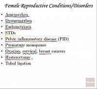 Female Breast Anatomy And Physiology Female Reproductive System Histology Anatomy U0026 Physiology