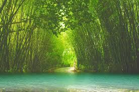 Bamboo Print Shower Curtain Curtains Ideas Bamboo Print Shower Curtain Inspiring Pictures