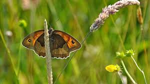 bbc radio 4 natural histories butterflies nine fluttery facts