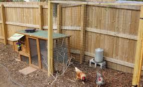 best backyard chicken backyard wonderful best backyard chicken silkie chickens are a
