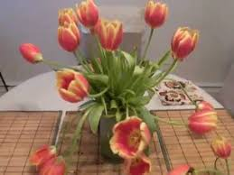 How To Grow A Bulb In A Vase Droopy Tulips How To Make Them Upright Youtube