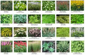 intro to green roofs part 3 of 3 green roof types and layers