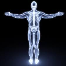 Online Human Body International Gcse Human Biology Distance Learning Oxford Open