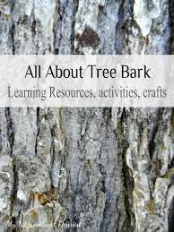 how old is that tree trees activities and the age