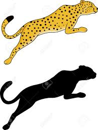jaguar clipart white tiger clipart jaguar pencil and in color white tiger