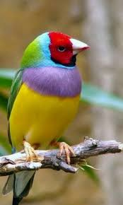 bird wallpapers beautiful birds wallpapers for android mobiles apk buffy