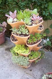 344 best succulent garden images on pinterest plants succulents